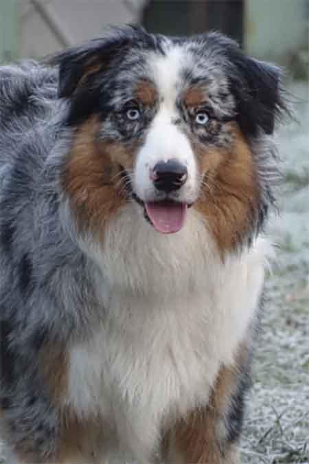 Oliver nouveau chien de la formation de praticien spécialisé en médiation par l'animal