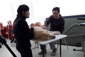 Formation sur le terrain intervenant spécialisé en médiation animale