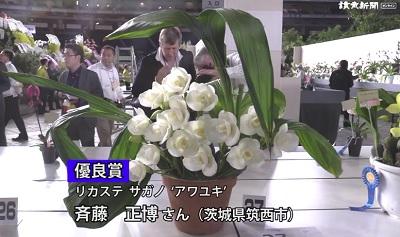 世界らん展優秀賞2019