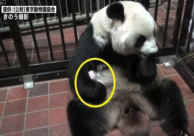 上野動物園でパンダ誕生