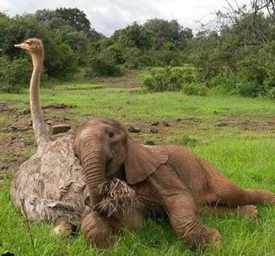 赤ちゃん象とダチョウ