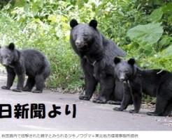 秋田市内で目撃されたツキノワグマ