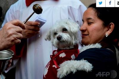 動物たちへ神の祝福、動物の守護聖人「聖アントニオ」の日 | 凡才!馬 ...