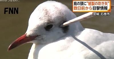 頭に矢の刺さった鳥