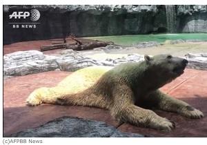 シンガポールの動物園で暮らしていたホッキョクグマ安楽死