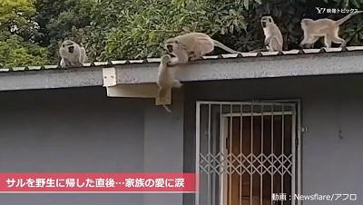 母猿が手を差し伸べる