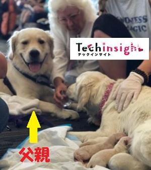 空港で介助犬が出産