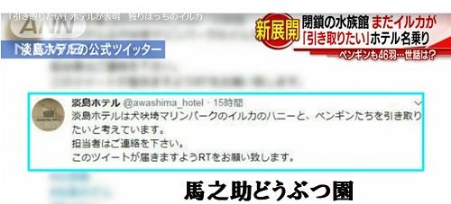 淡島ホテルがイルカのハニーの引き取りを表明