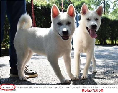 紀州犬2頭和歌山公園動物園仲間入り