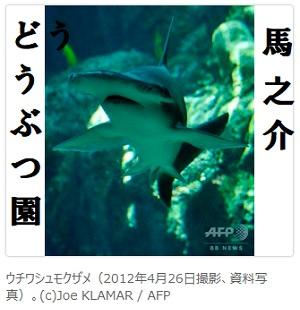 ウチワシュモクザメは海藻も食べている