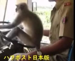 猿がハンドルを握っているインドのバス