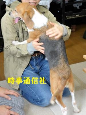 実験犬からペットへ