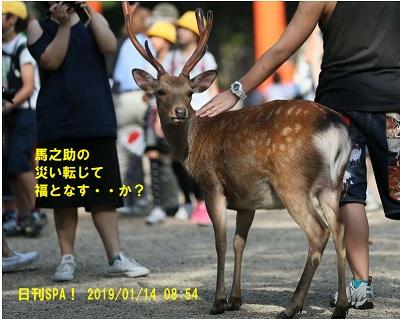奈良の鹿が中国人観光局に虐待されている