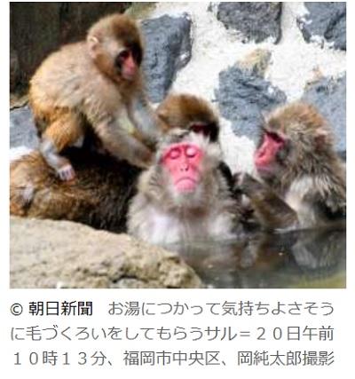 猿が露天風呂