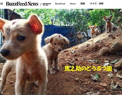 インドの犬狂犬病