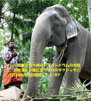 88歳で死んだインド象