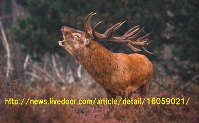 プリオン病の鹿肉を食べた人はどうなるか?