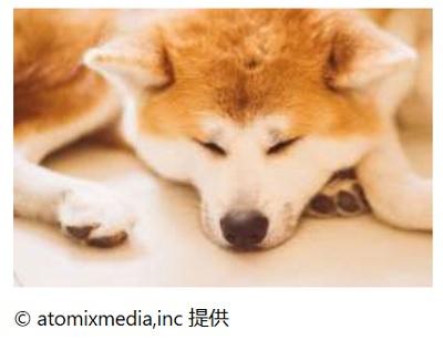 ザギトワ選手の愛犬マサル