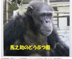 宮崎市フェニックス自然どうぶつえんから脱走したチンパンジーの「ゲンキ」