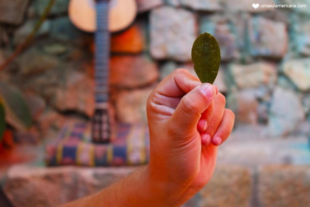 Mal de altitude - folha de coca | 10 coisas que você precisa saber antes de fazer sua viagem pela Bolívia