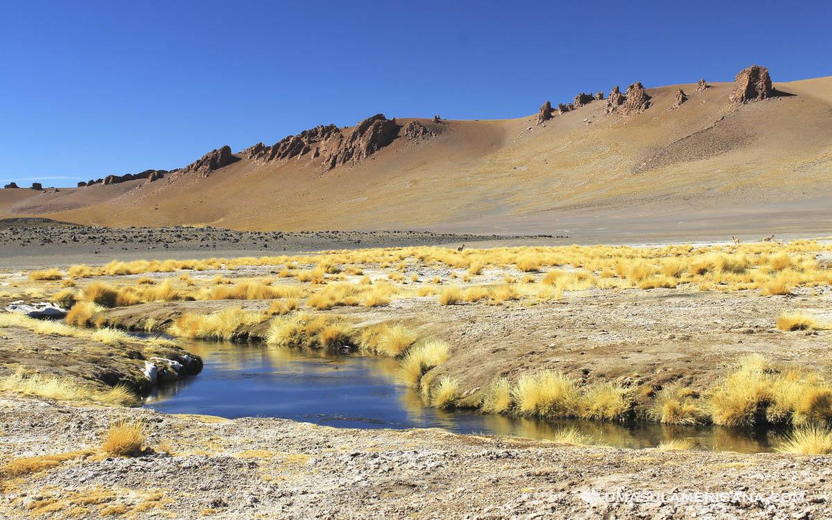 Viagem pelo Chile, conheça o Salar de Tara, no Atacama