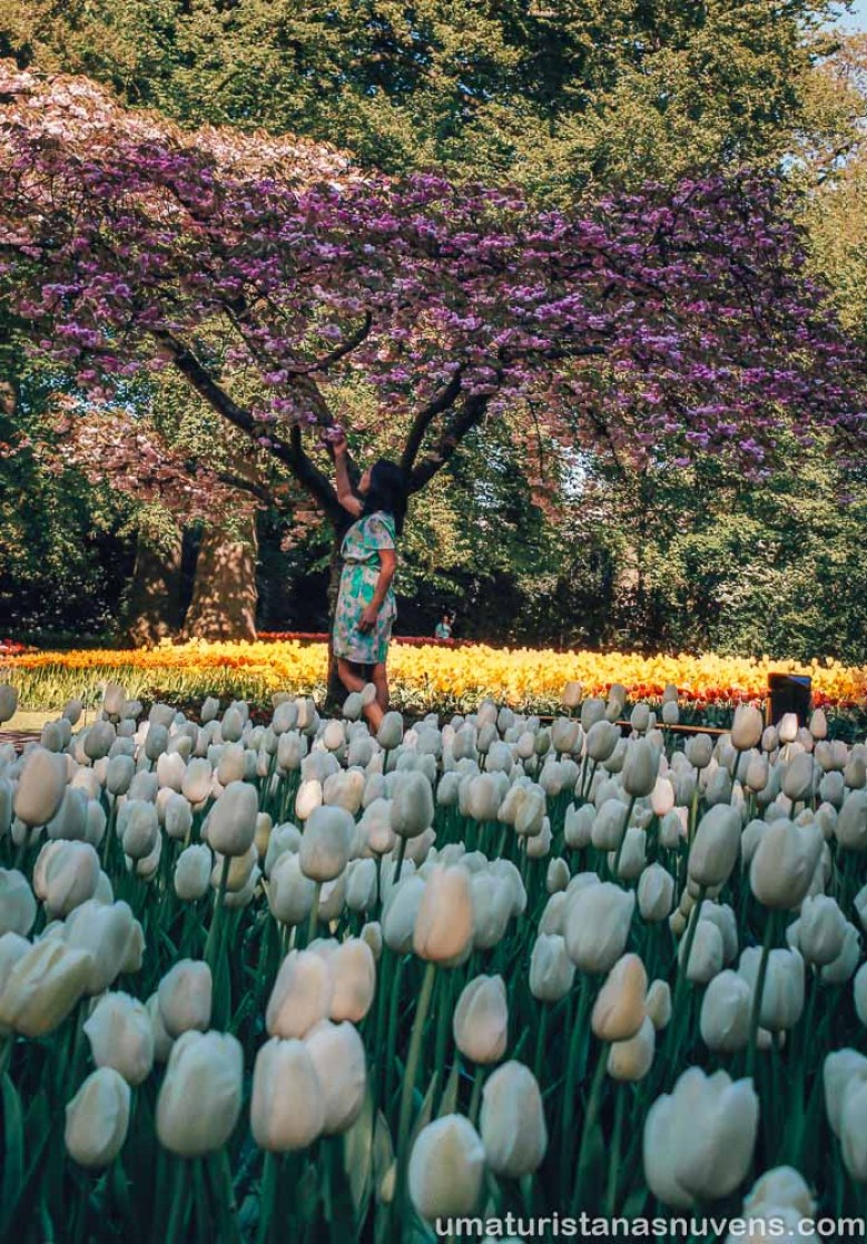 Keukenhof - o maior parque de flores do mundo