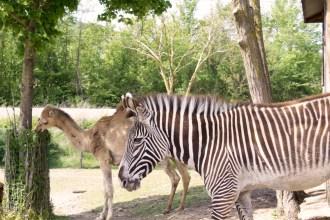 Leo Wild Park