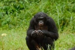 Lola ya Bonobo LO-4480
