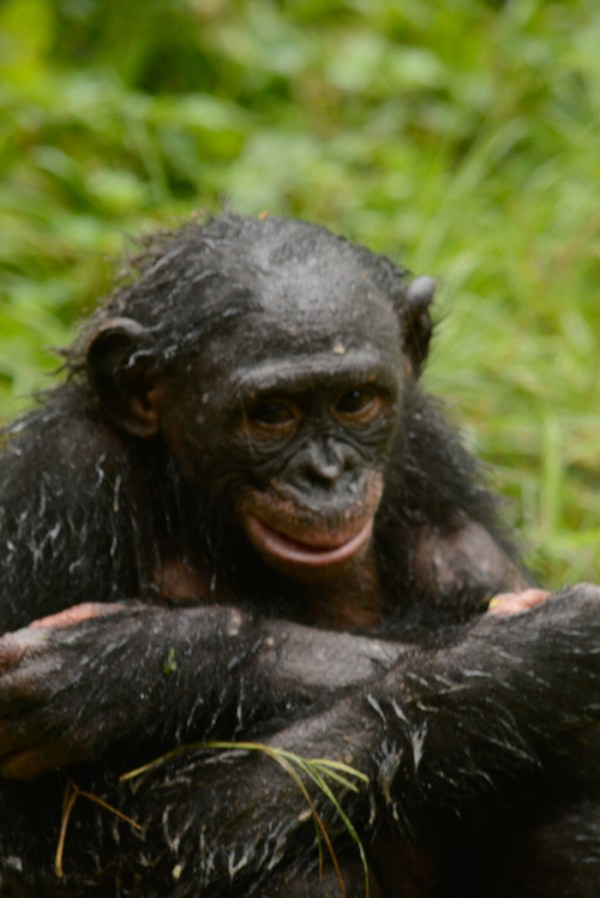Lola ya Bonobo LO-4511