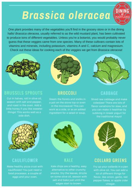 Brassica oleracea nut. article