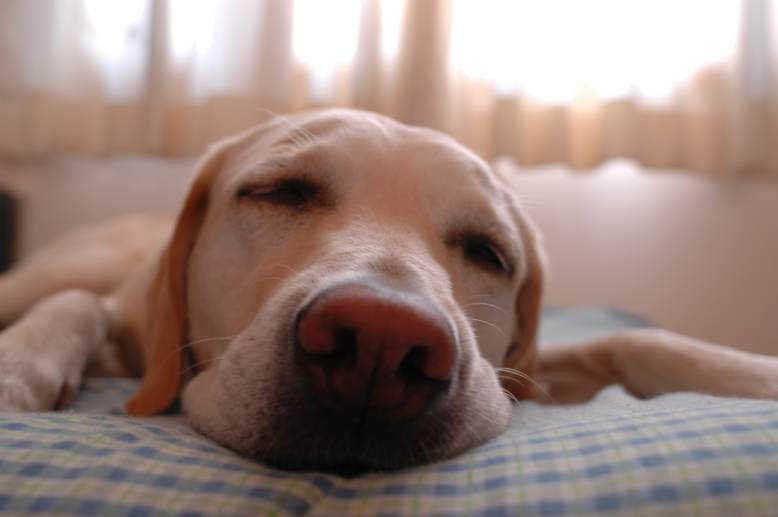 https://commons.wikimedia.org/wiki/File:Dog.in.sleep.jpg