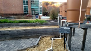 Visiting the community garden on campus at UMD