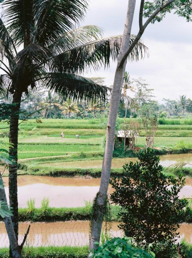 um-doce-dia-ubud-bali-indonesia-03