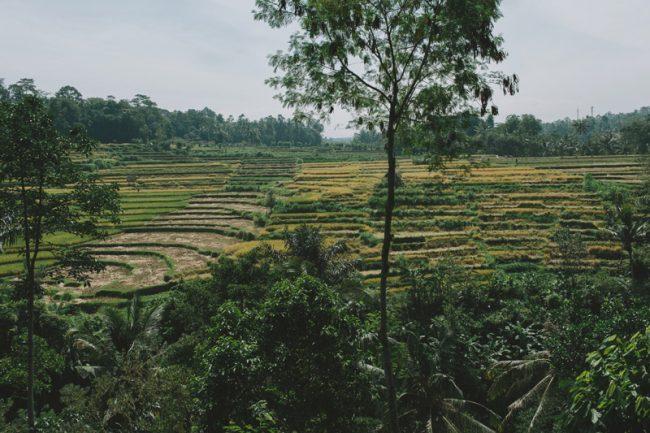 um-doce-dia-casamento-em-bali-indonesia-banyan-12
