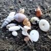 海岸お散歩カフェ~のんびりビーチコーミングタイム・沖ノ島 2016年4月23日