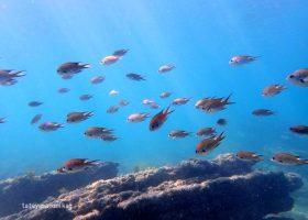 2017沖ノ島・サンゴに出会えるシュノーケリング体験今年も開催します!募集開始しました。