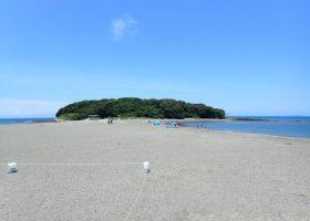 沖ノ島の様子5 今年は出会えました!