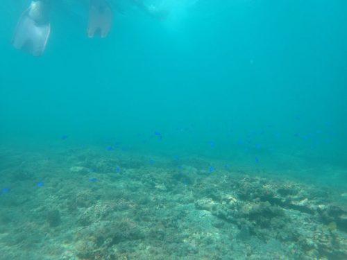 足元に青い魚たち