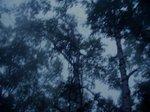 night_fog01.jpg