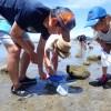 今年最後の鎌倉海岸生物観察会