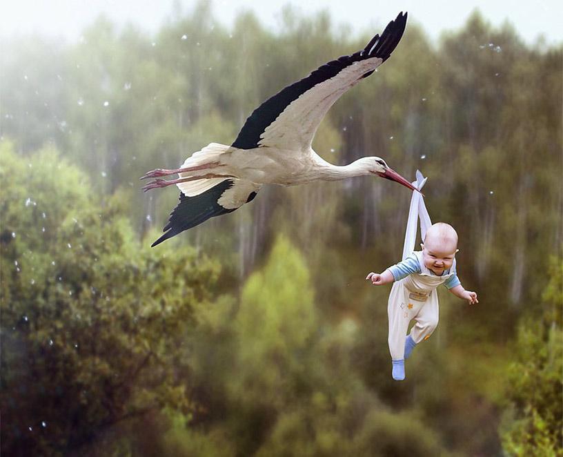 Аист и ребенок смешные картинки