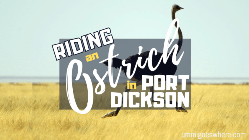 Ostrich Farm in Port Dickson | Ummi Goes Where?