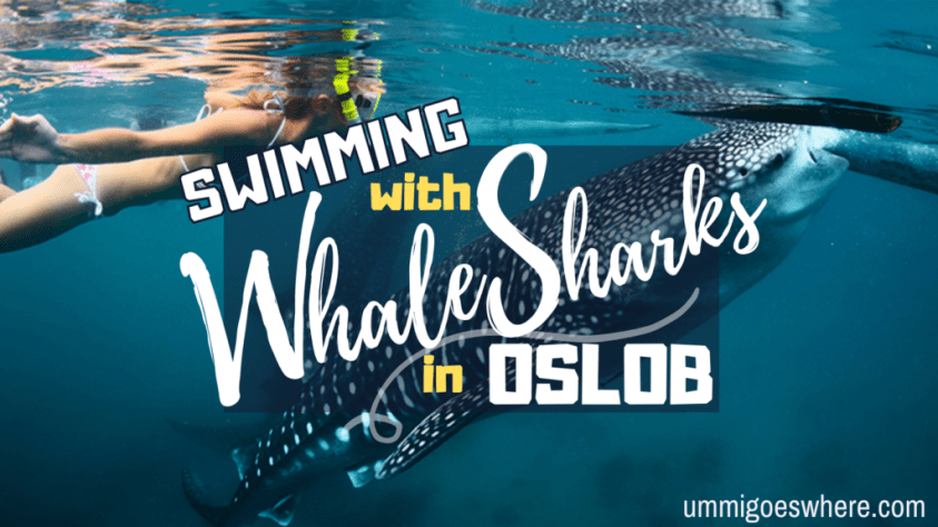 Swimming with Whale Sharks in Oslob   Ummi Goes Where?
