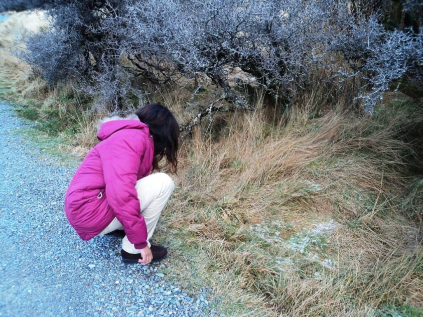 Looking for snow at Mount Cook