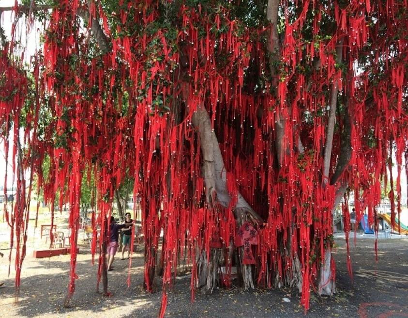 Wishing Tree, Sekinchan