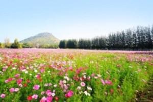 Field full of flowers