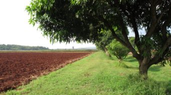 Khao Yai fields a location in Thailand for video production