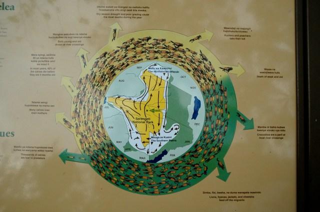 O Círculo da Vida