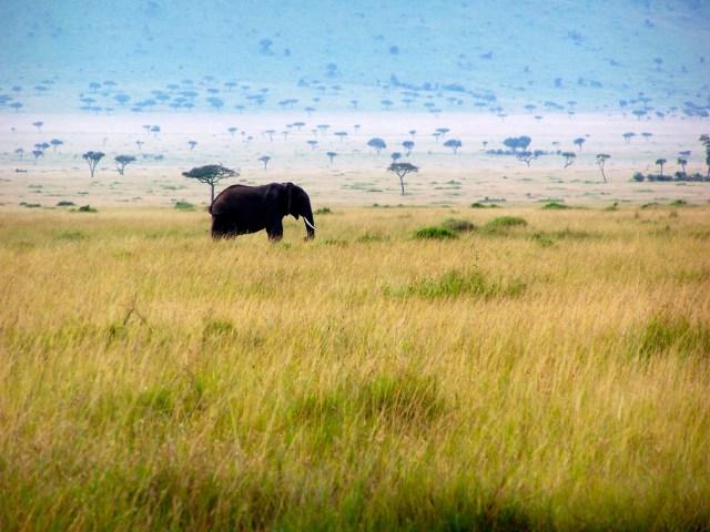 A Grande savana Africana