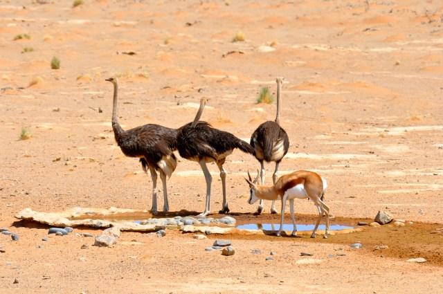 Os animais bebem água ao lado do Acampamento.